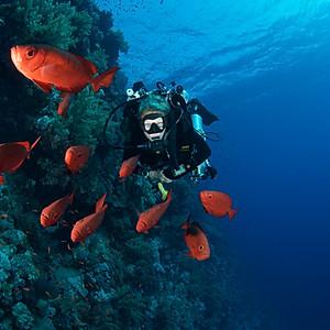 B-D-E Safari on MY Blue Seas