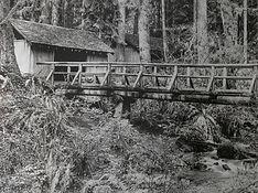 Footbridge in the Forest.jpg