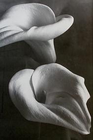 Two Lilies II Final.jpg