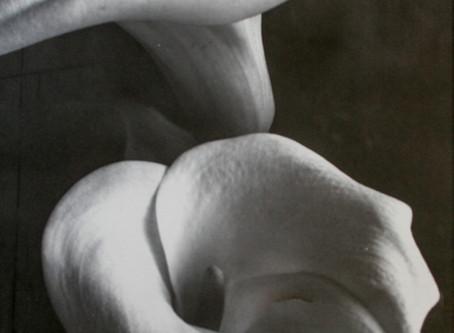 """""""Two Lilies II"""" ~ Palladium toned Kallitype"""