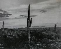 Desert Scenic #3 Cool.jpg