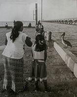 Feeding the Pelicano 9min.jpg
