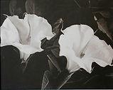 Datura Blooms II Web.jpg
