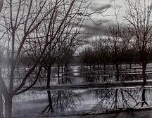 Pecan Orchard Sunset.jpg