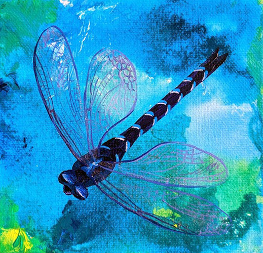 dragonfly on blue.jpg