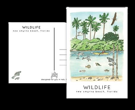 NSB Wildlife Postcard