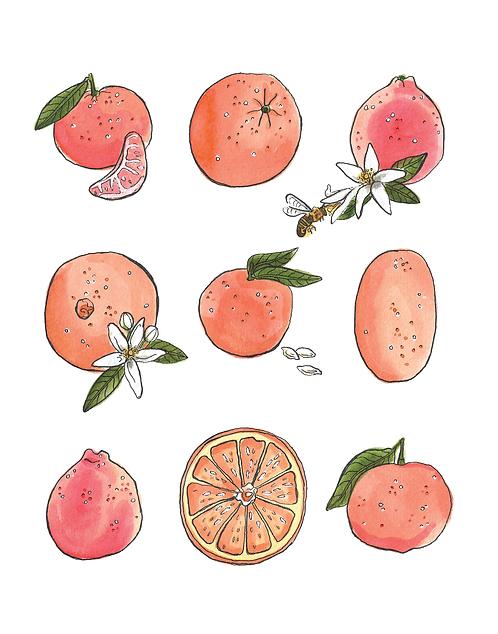 Citrus Chart Print