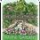 Thumbnail: Ravine Gardens Florida State Park Sticker