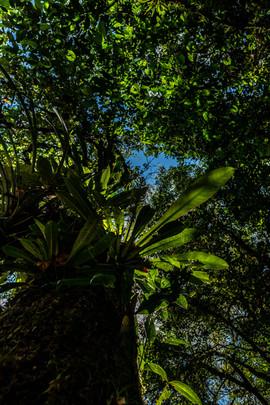 guyane-camp-canopée.jpg