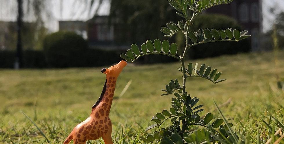 方寸景长颈鹿模型, 1:87th HO scale model animal, model giraffe, model railway/railroad/train layouts and scenes, miniatures/miniarts