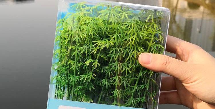 50/pkg Model Bamboo Trees