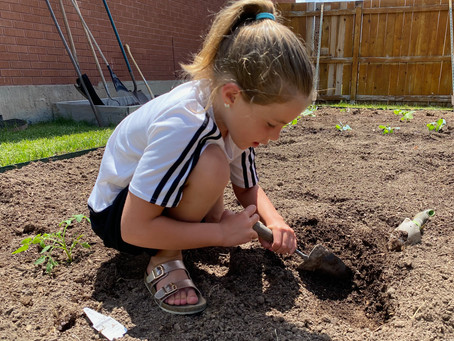 Some like dirt, and some do not!  But everyone loves a well-cared-for garden.