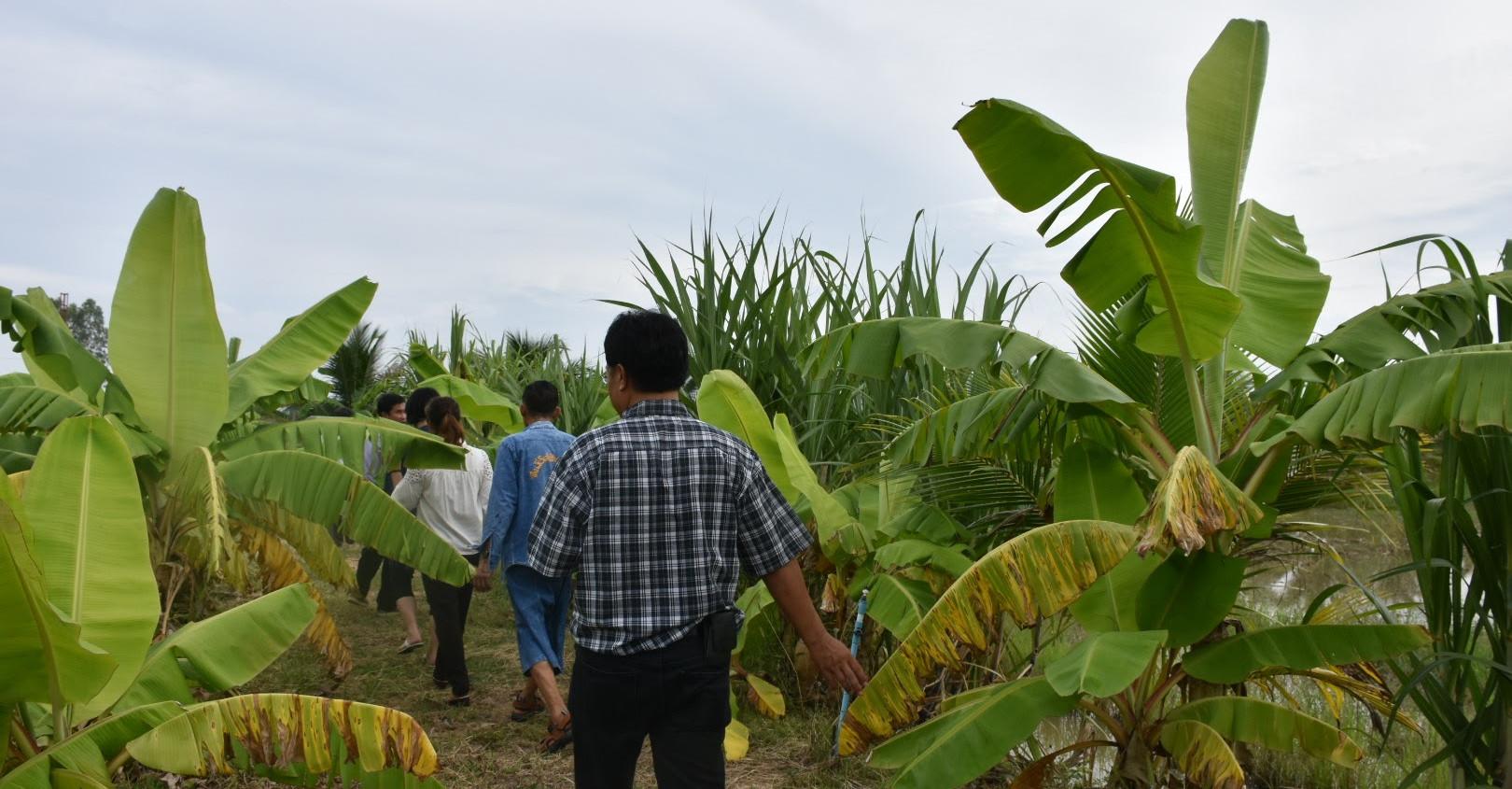 ココナッツ農園へ