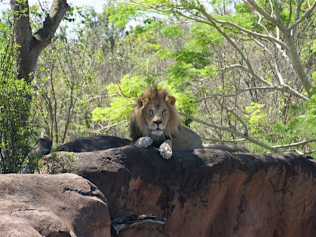 5 Things: Wild Africa Trek at Animal Kingdom