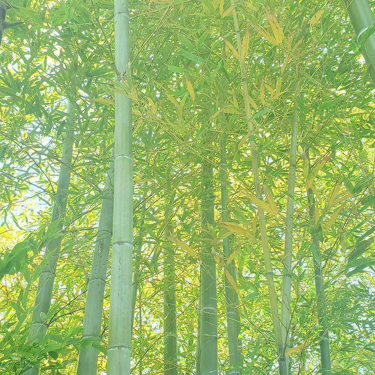 鎌倉の森を元気にしよう~極楽寺竹林間伐~