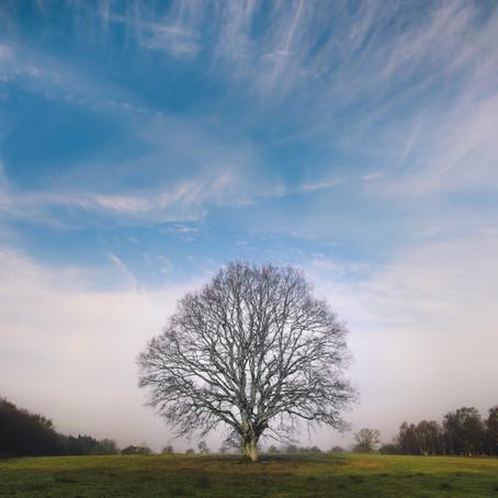 Las raíces de la existencia