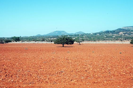 terra bruciata a Mallorca