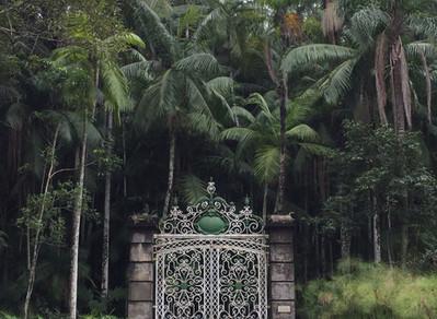 Faça um tour virtual no Jardim Botânico de São Paulo