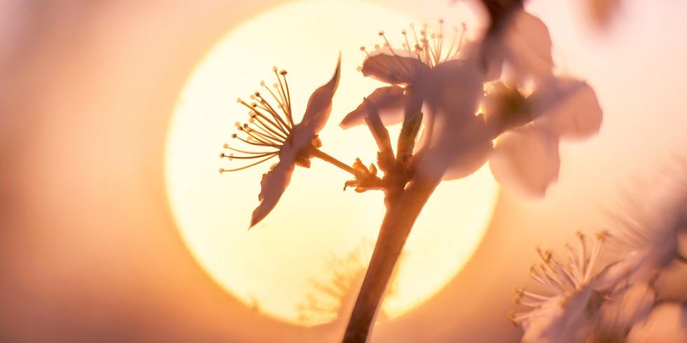[Plantando ideias] Primavera: o ano novo da natureza
