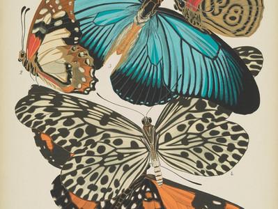 A maior acervo online de biodiversidade
