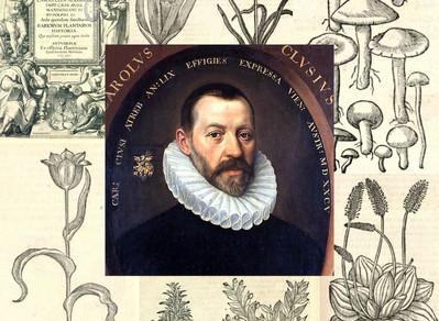 Charles de L'Écluse – Carolus Clusius (1525 – 1609)