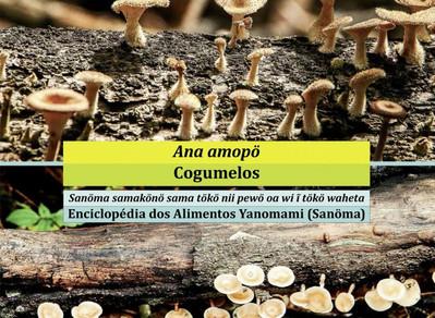 Os cogumelos Yanomami