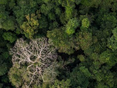Dia Nacional de Proteção das Florestas