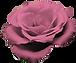 cvc_0000_rose.png.png