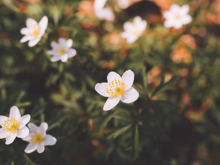 De oude romantiek van het Zevenbergenbos (Ranst)