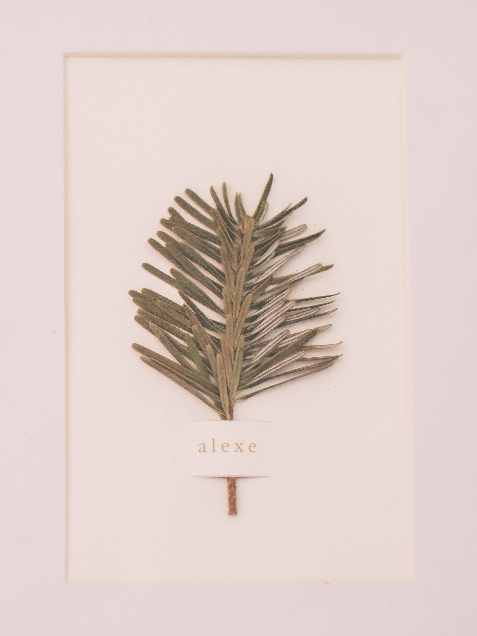 ALEXE-2488