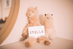 Stella-8817