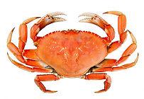 dungeness_crab_no_background.jpg