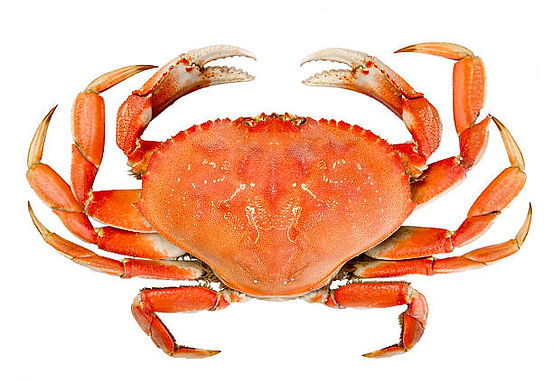 dungeness_crab_no_background.jpg