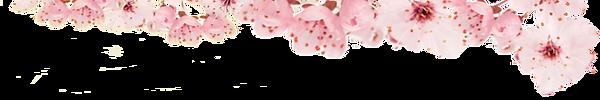 SMAB_WebsiteHeader_Vsn04_Blossom_980x163