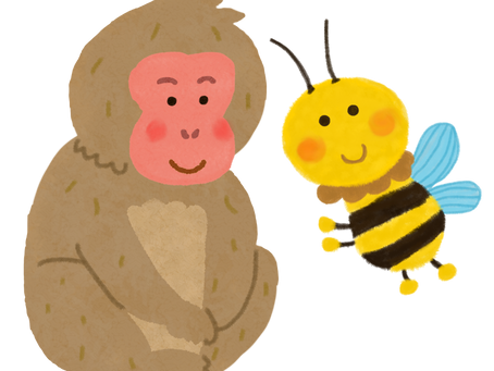 Snow Monkey and Bee website goes live!
