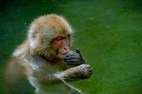 Snow Monkey_DSC9868_Edited_600x400.jpg
