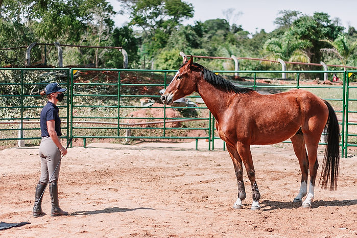 horselosophy 2.jpg