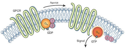GPCR-pathway-2.jpg