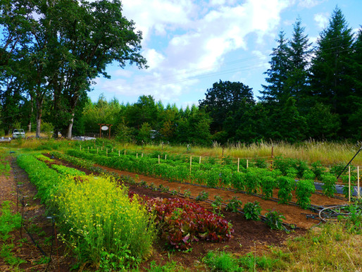 Building an IoT sensor for the common farmer