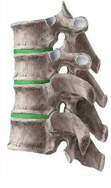 infinite health vertebrae side diagram.w
