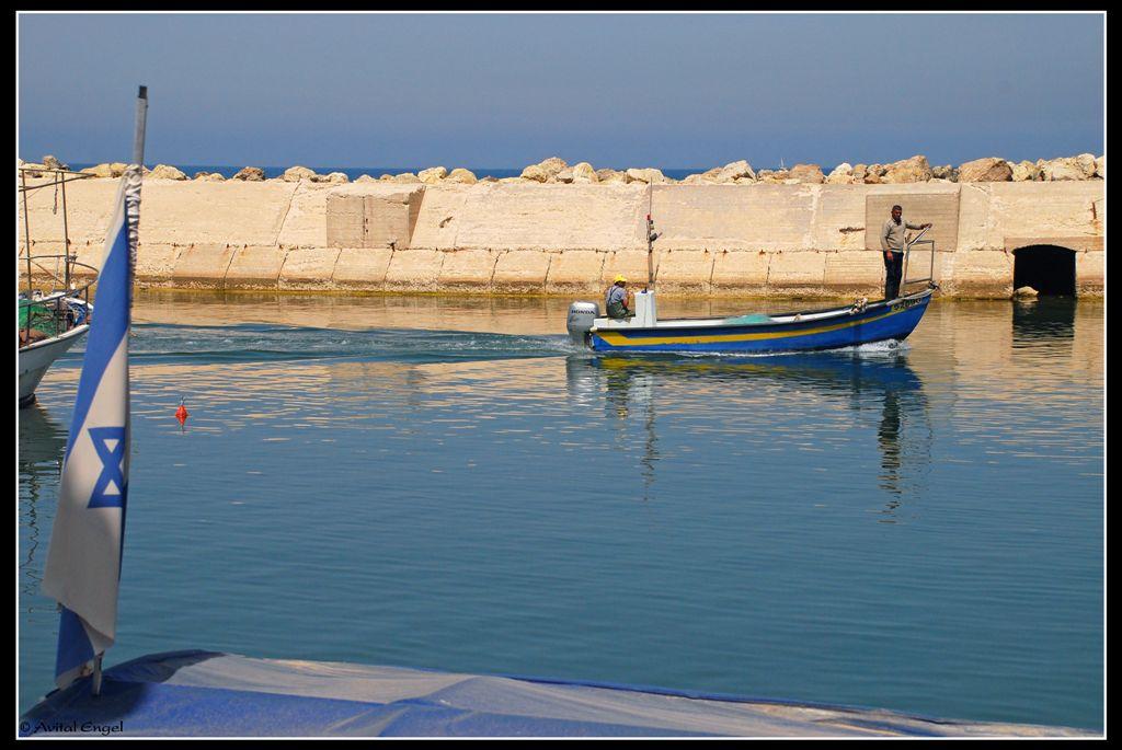 דייג כחול לבן