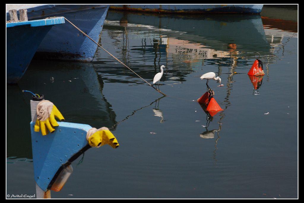 כפפות בנמל