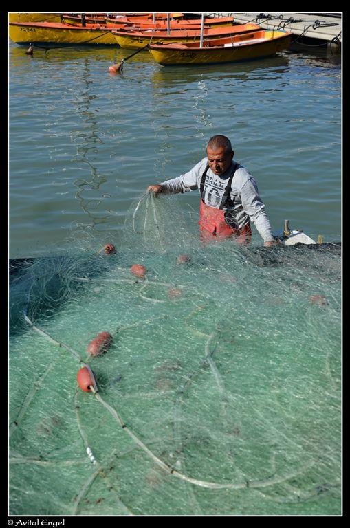 דייג ביפו