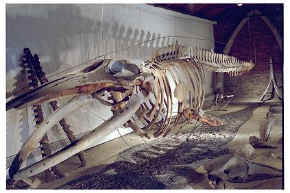 skeleton02.JPG