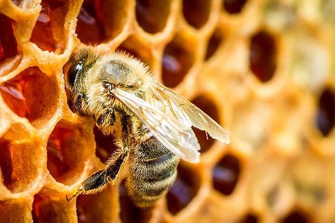 cutie patootie bee.jpg