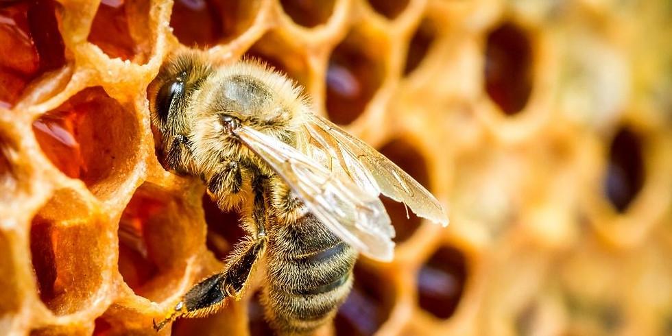 Spring/Summer Beekeepers Forum 2020