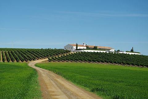 Herdade Do Rocim Angel Fine Wines
