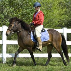 Saddling the Gaited Horse