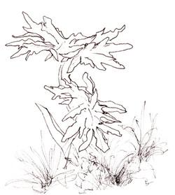plant form