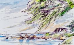 wind on Rottnest